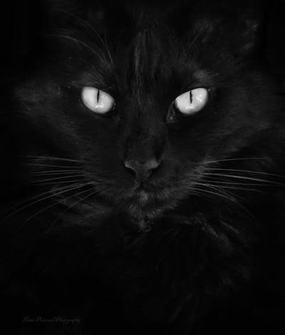 Eos, Darkness