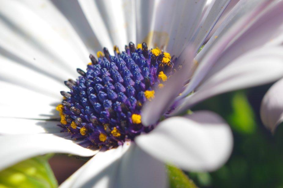 Mini blue flowers in white flower