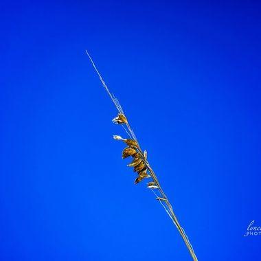 NSB Beach Grass