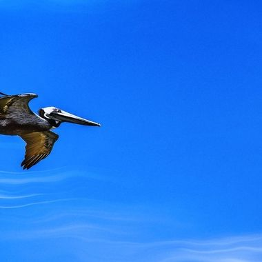 NSB Pelican Details