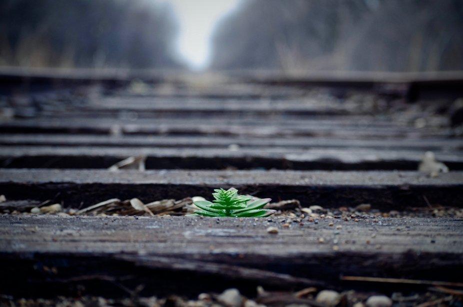 Grow Anywhere