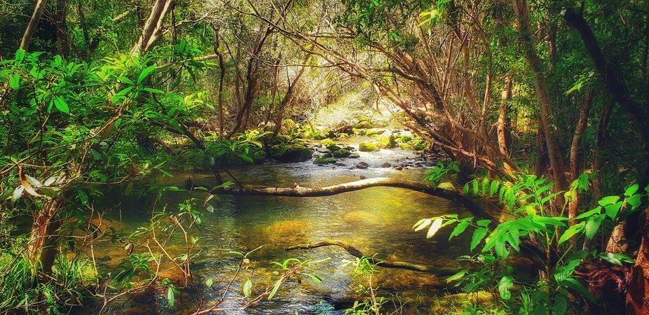Behana Gorge Rainforest