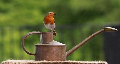 Robin on the can