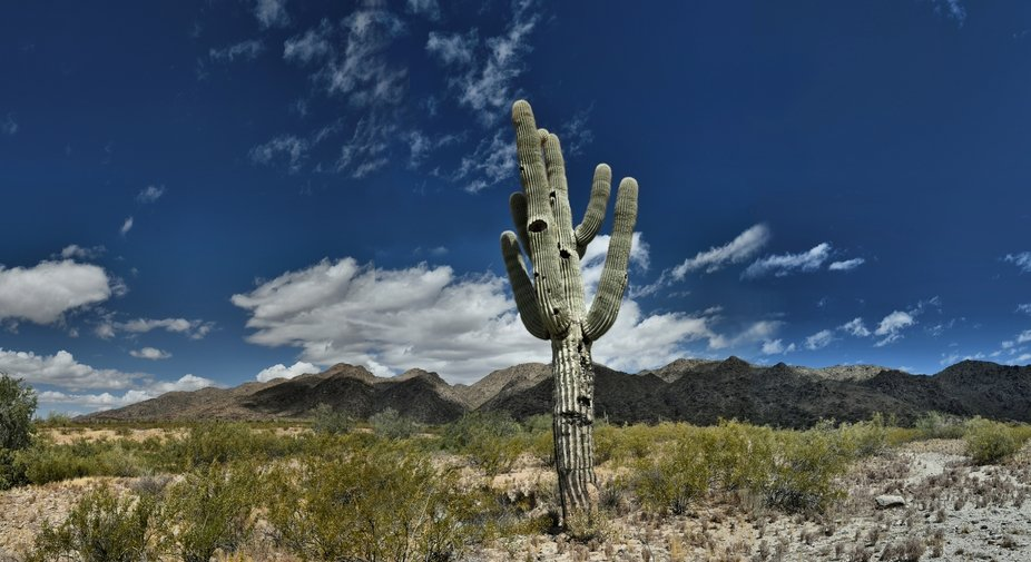 Saguaro Cacti residing within the Phoenix South Mountain Park.  A three frame stitch.