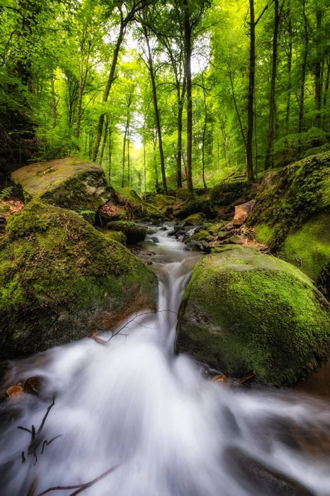 Mullerthal spring landscape Luxembourg 2019