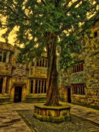 Skipton castle tree