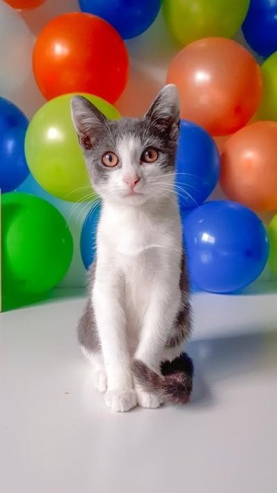 Kitten Party Shot