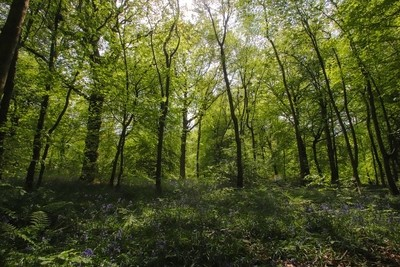 A beautiful wood in spring