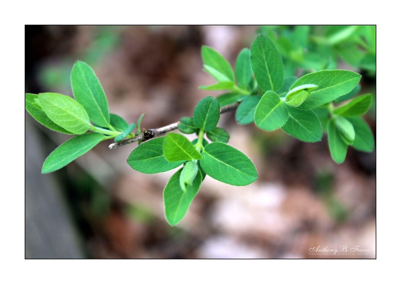 Leaves Art 2687a