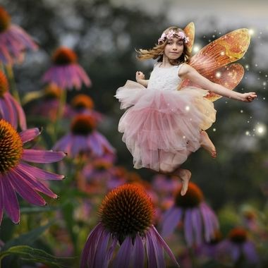 Cassidy Fairy with Echinacea