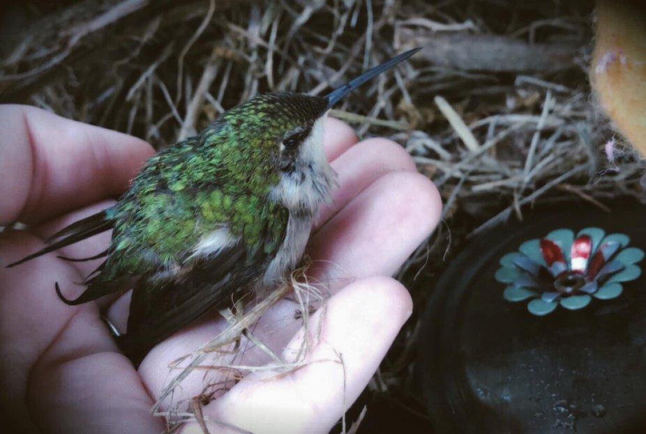 Holding a hummingbird.