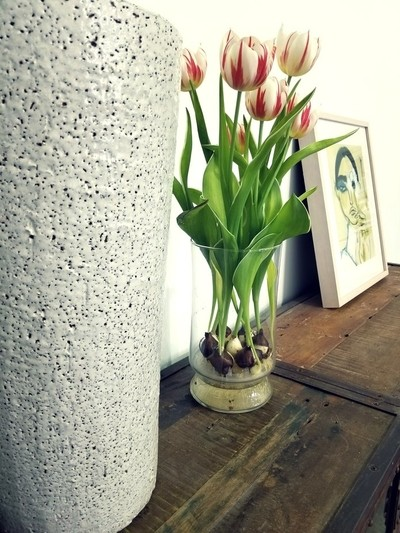 Tulips and Art