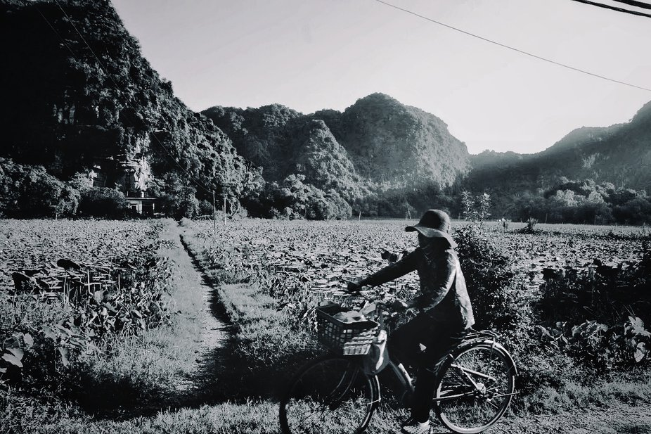 A woman on her daily trip to work in the middle of Nihn Binh Mountain range