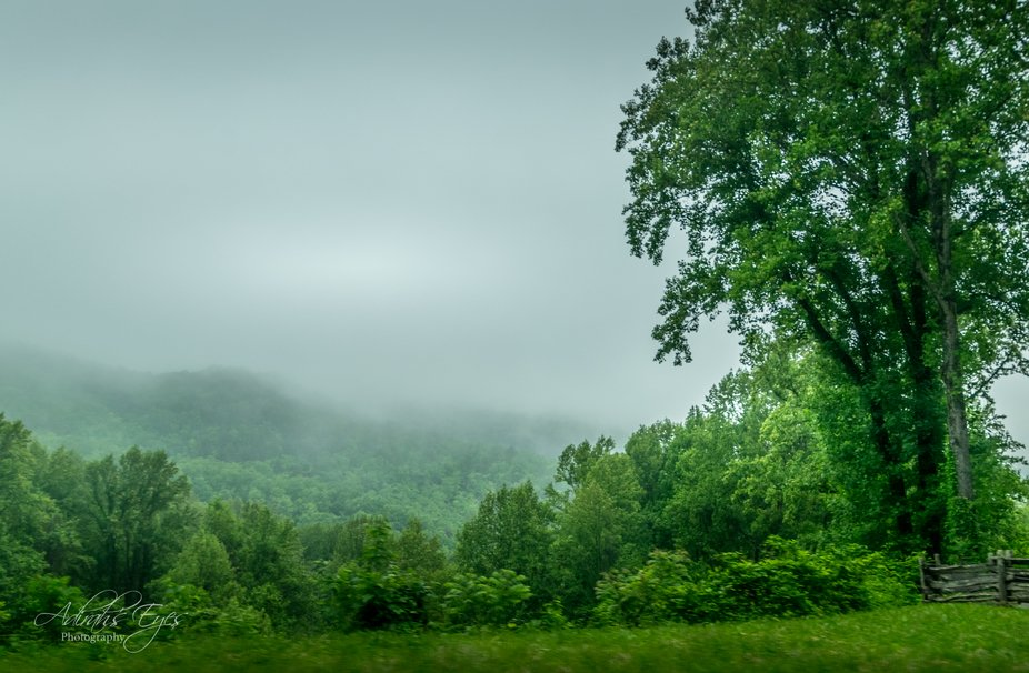 Morning Softness truly reflects what the Smokies are all about.. the soft layer of clouds that de...