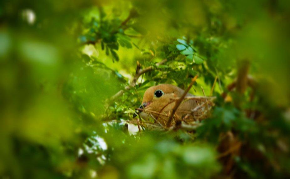 Peaceful on the nest!