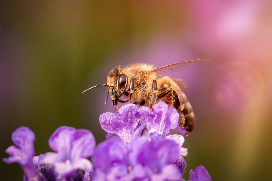 Macro shot of bee