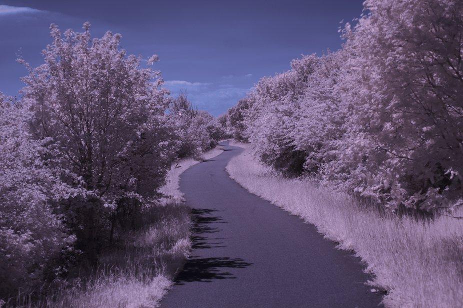 Infrared blossom