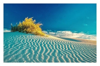 Golden Sunrise on the Dunes in White Sands New Mexico