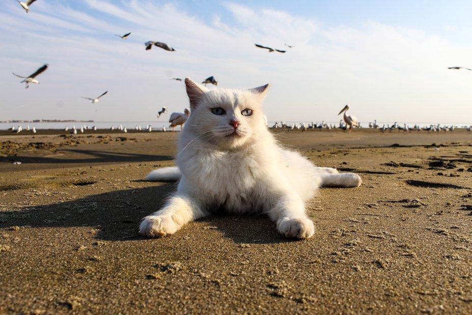 Chant's Cat 7