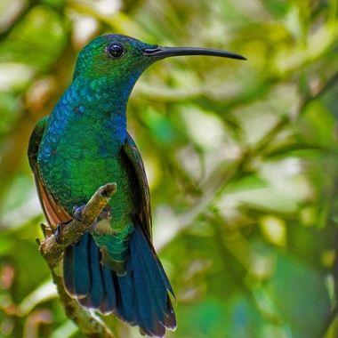 Close up hummingbird