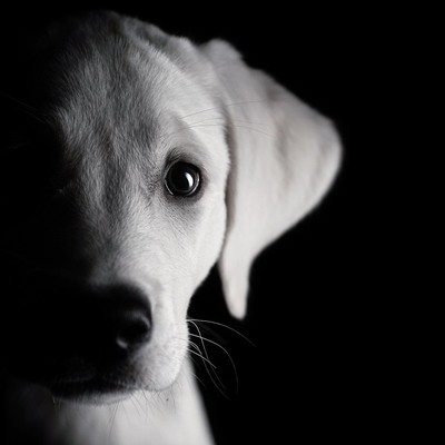 halfdog