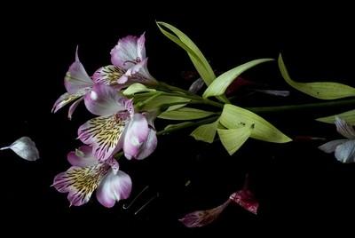 Alstroemeria (Peruvian Lilies) Bouquet