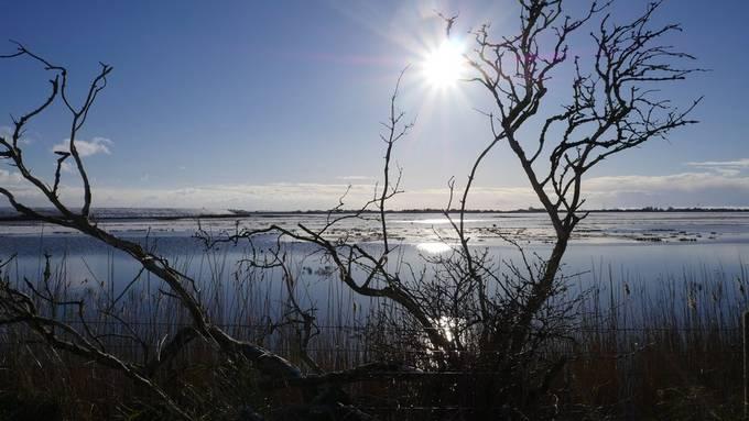Fenland Winter Sun