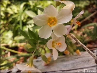 Wild flower ground view