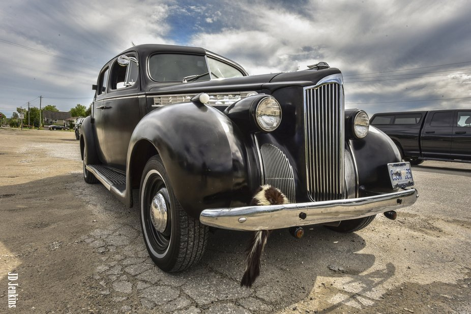1940 Packard 110 Sedan with stuffed skunk on bumper