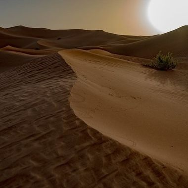 Taken in the Omani dunes.  (Empty Quarter).