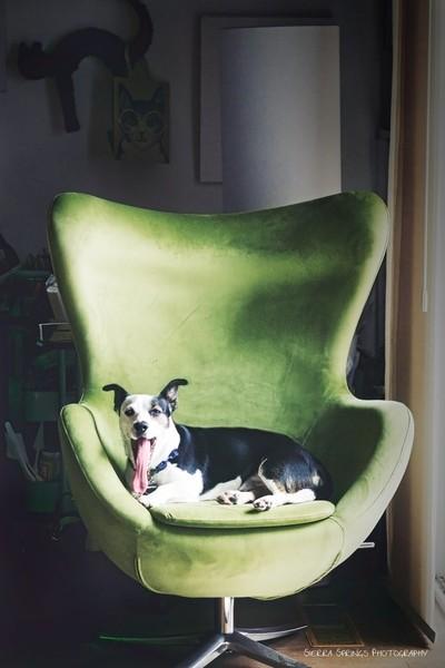 ThePhotographer's Dog