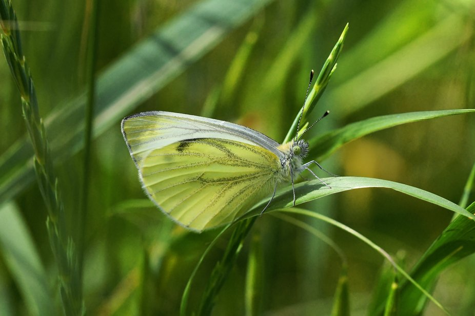 Butterfly in the green