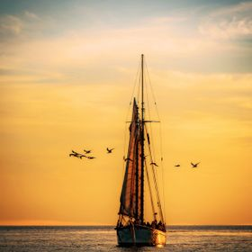 A sailboat at sunset surrounded by seagulls