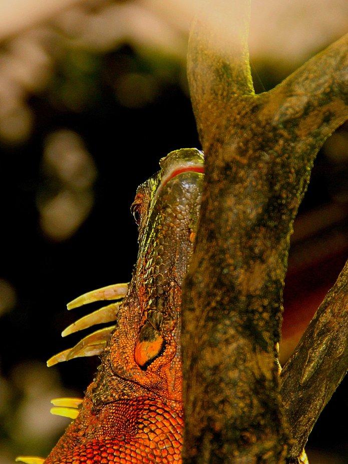 Just Anoher Lizard