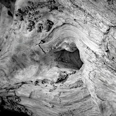 B&W driftwood