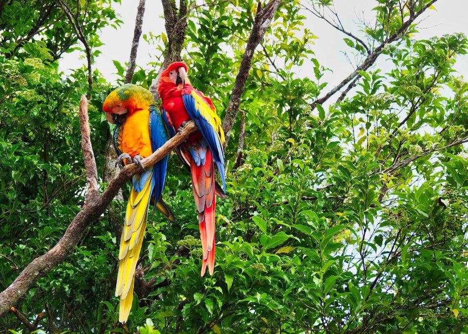 Capturing Macaws