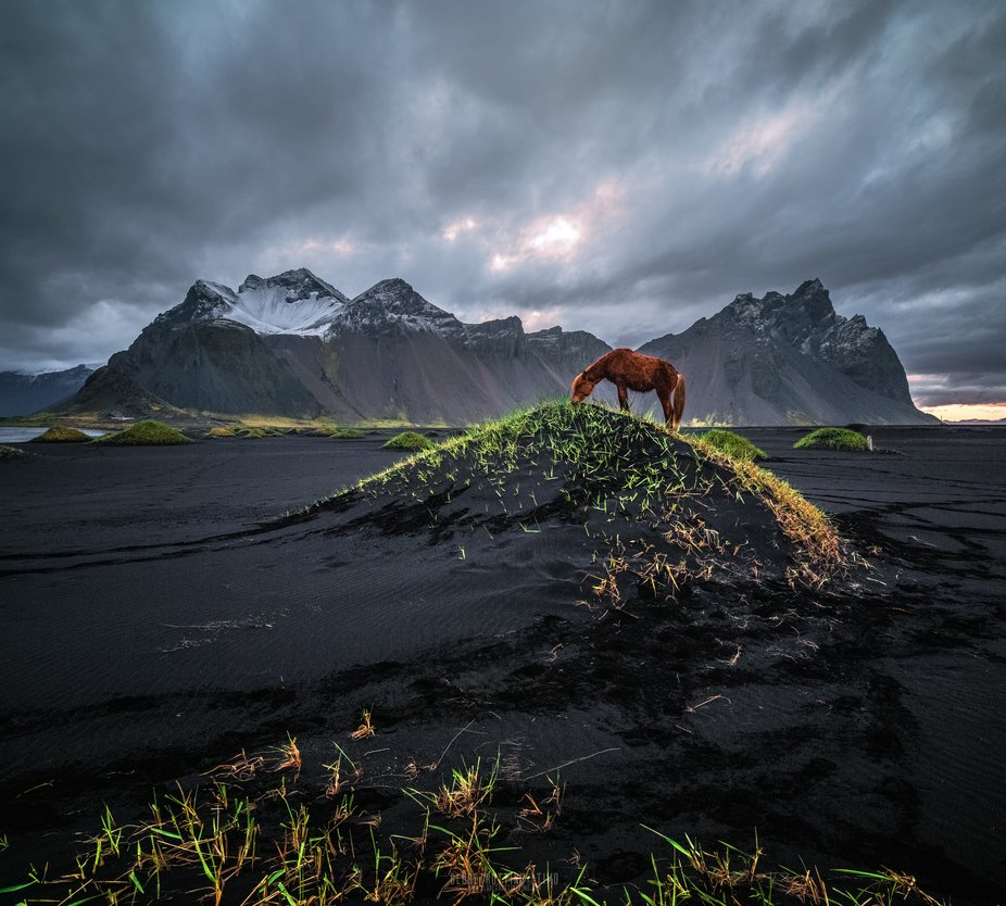 Wild Icelandic horses at Vestrahorn.    Couldn't have asked for a better company to watch the s...