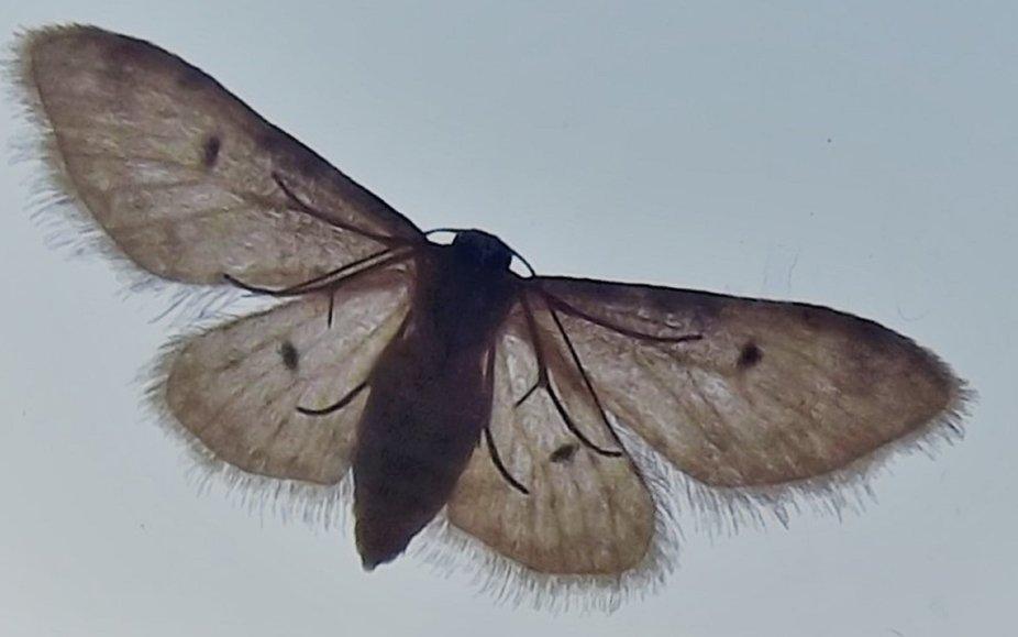 and appreciating Moths anyway