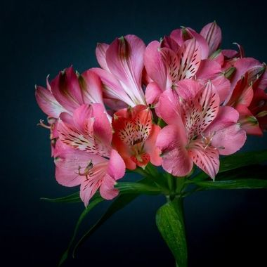 flowers photographed with flash and natural light
