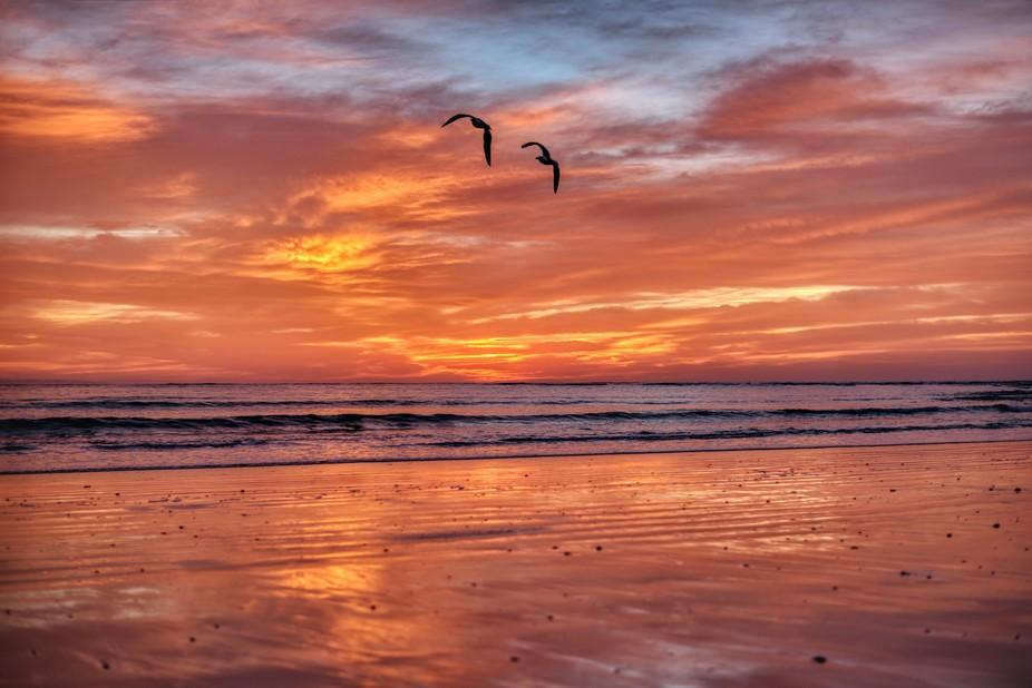 Gulls and Sunrise