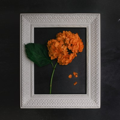 Hydrangea in Orange