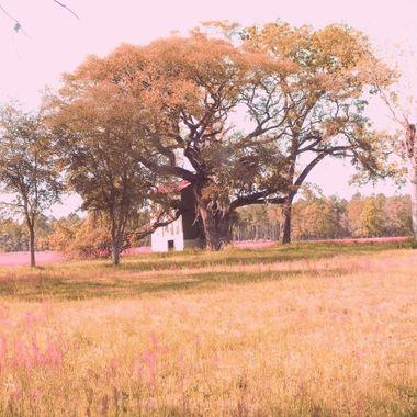 bulloch County (26) copy