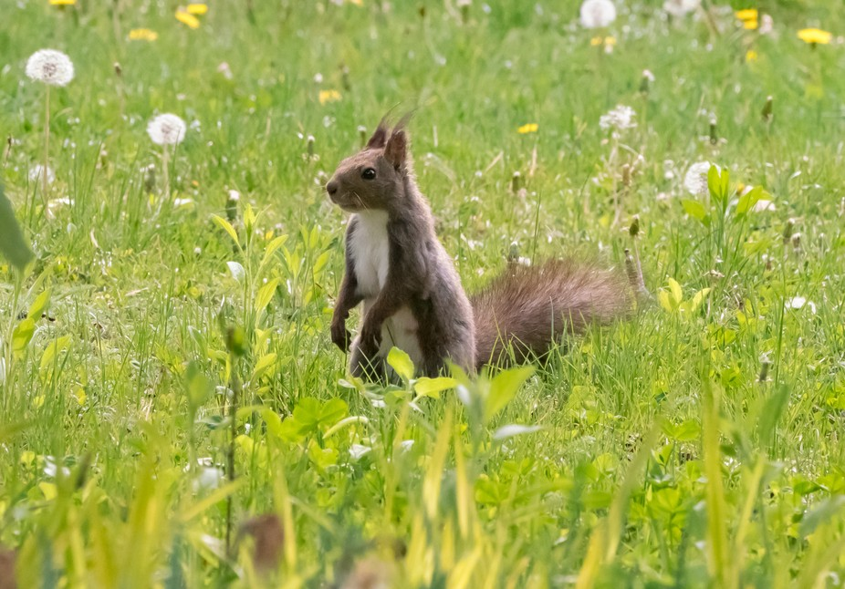 Squirrel, animal, rodent, wild life, cute