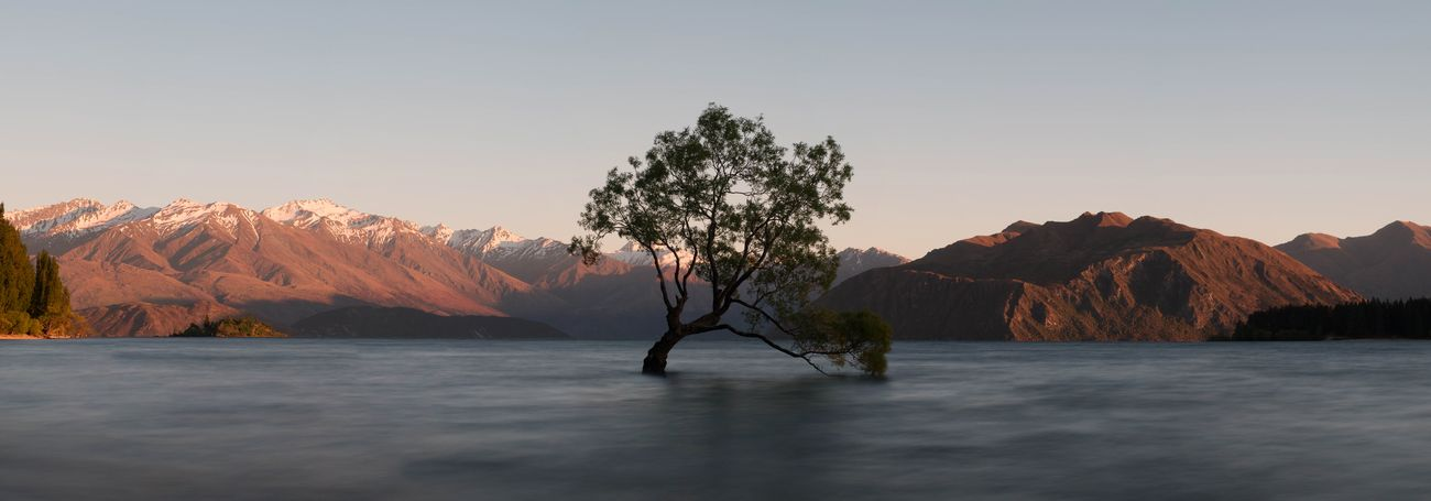The lonely tree of Wanaka