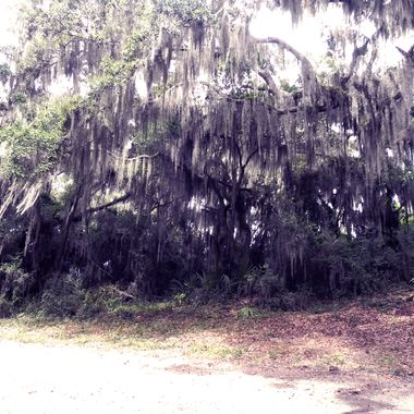 View from the Wildlife Preserve Savannah, GA copy