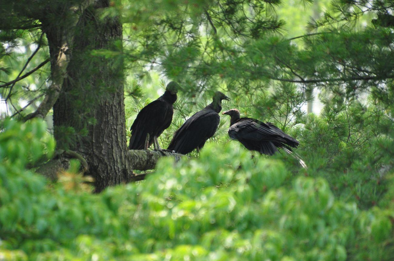 Merkle Wildlife Sanctuary Croom Upper Marlboro, Maryland