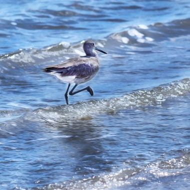Will the Willet on a Jog
