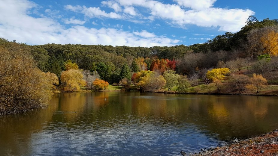 The autumn colours of Mount Lofty.