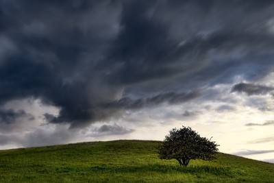 Magic one tree photo with clouds