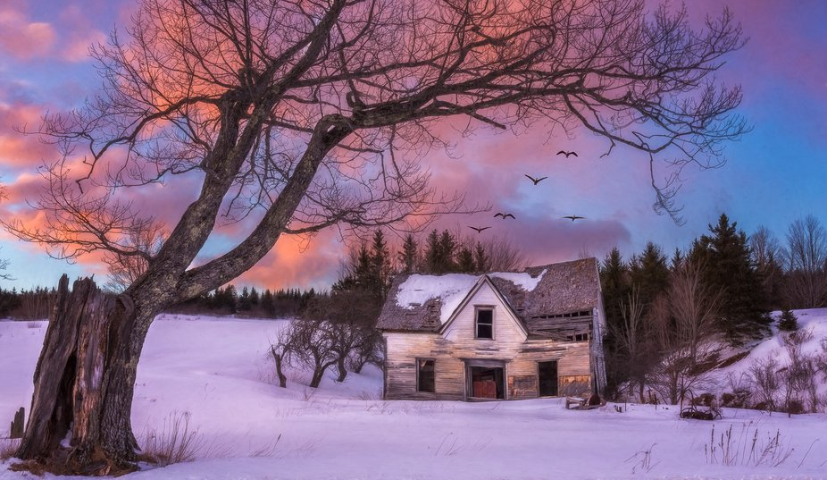 An old homestead sits abandoned in rural New Brunswick, beautifully framed by a huge tree that ha...